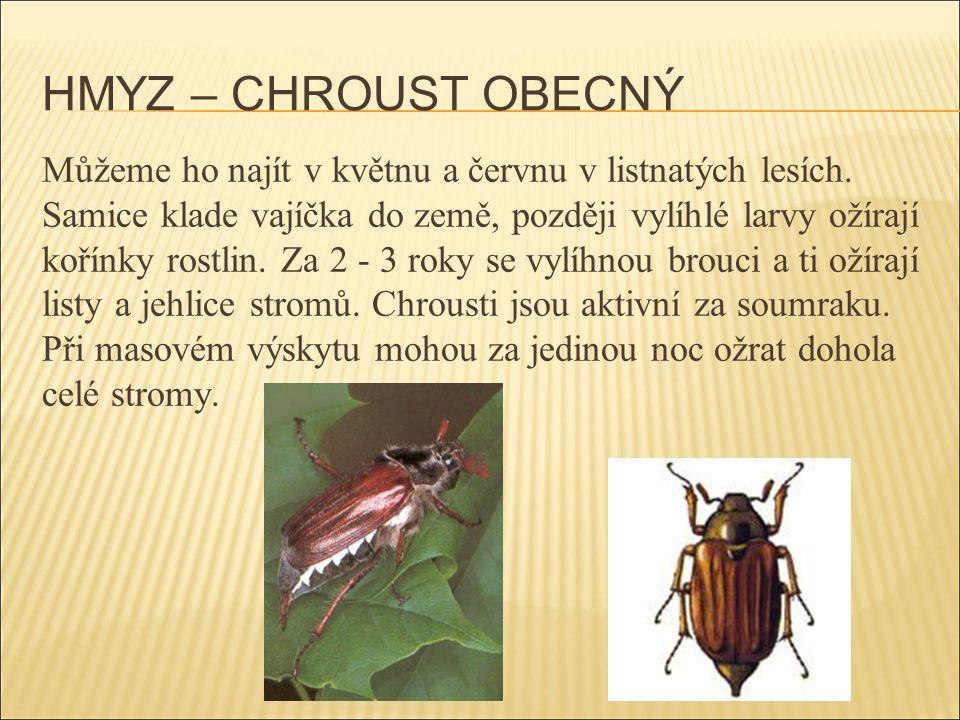 HMYZ – CHROUST OBECNÝ Můžeme ho najít v květnu a červnu v listnatých lesích. Samice klade vajíčka do země, později vylíhlé larvy ožírají kořínky rostl