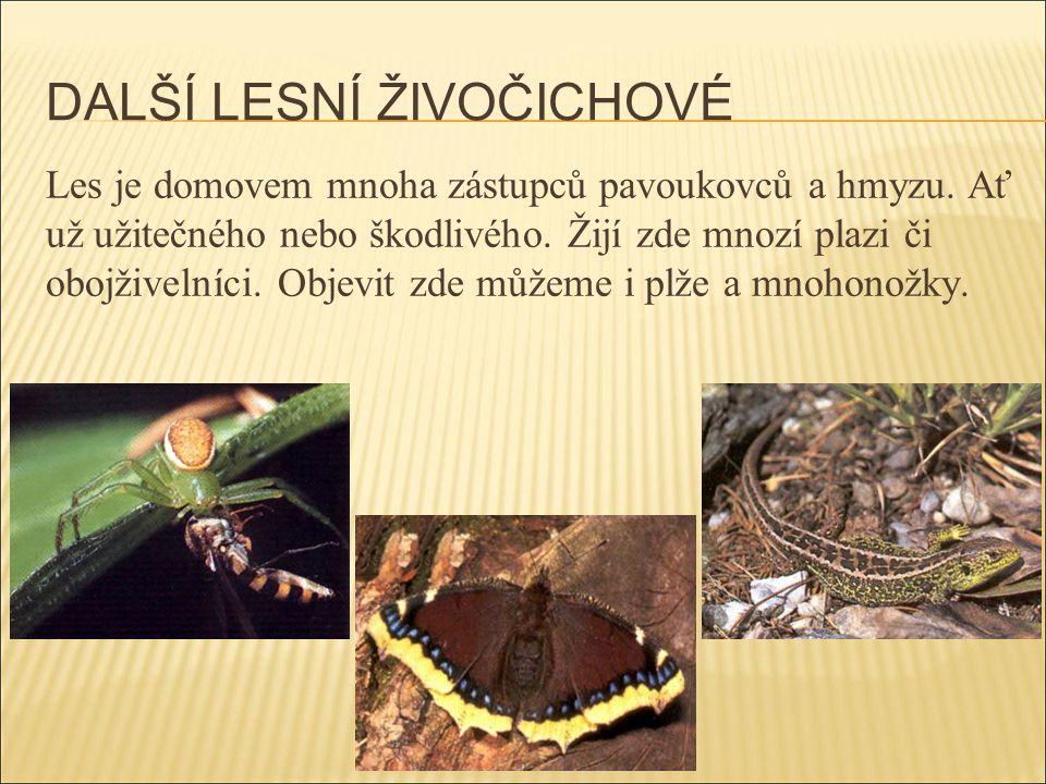 DALŠÍ LESNÍ ŽIVOČICHOVÉ Les je domovem mnoha zástupců pavoukovců a hmyzu. Ať už užitečného nebo škodlivého. Žijí zde mnozí plazi či obojživelníci. Obj