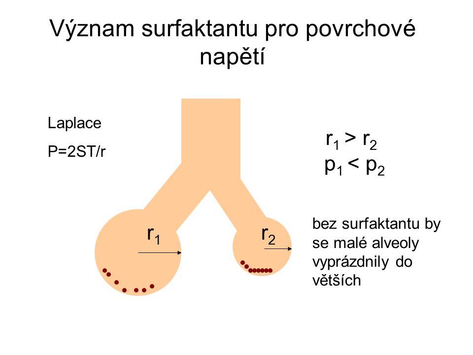 Význam surfaktantu pro povrchové napětí r 1 > r 2 p 1 < p 2 bez surfaktantu by se malé alveoly vyprázdnily do větších r1r1 r2r2 Laplace P=2ST/r