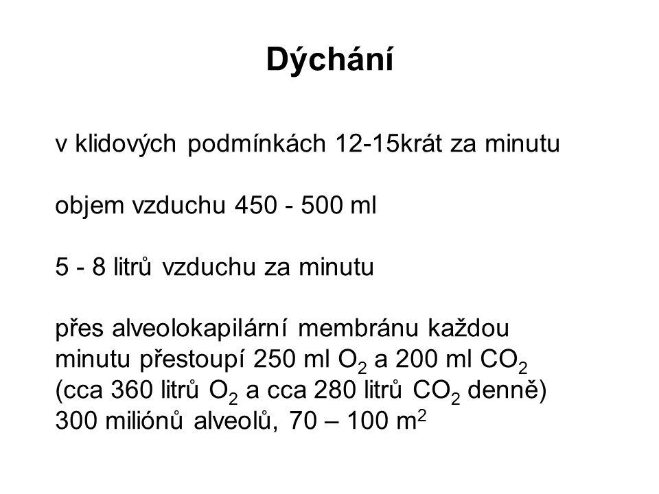 Dýchání v klidových podmínkách 12-15krát za minutu objem vzduchu 450 - 500 ml 5 - 8 litrů vzduchu za minutu přes alveolokapilární membránu každou minu