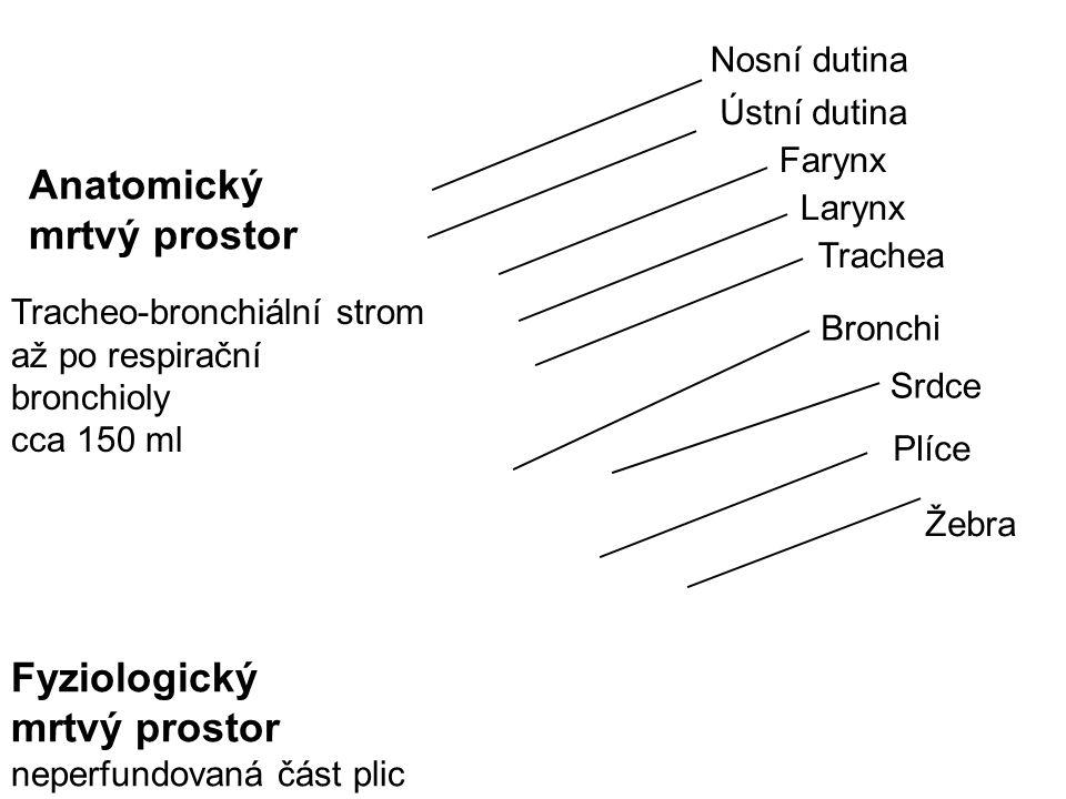 Nosní dutina Trachea Farynx Larynx Ústní dutina Bronchi Srdce Plíce Žebra Anatomický mrtvý prostor Tracheo-bronchiální strom až po respirační bronchio