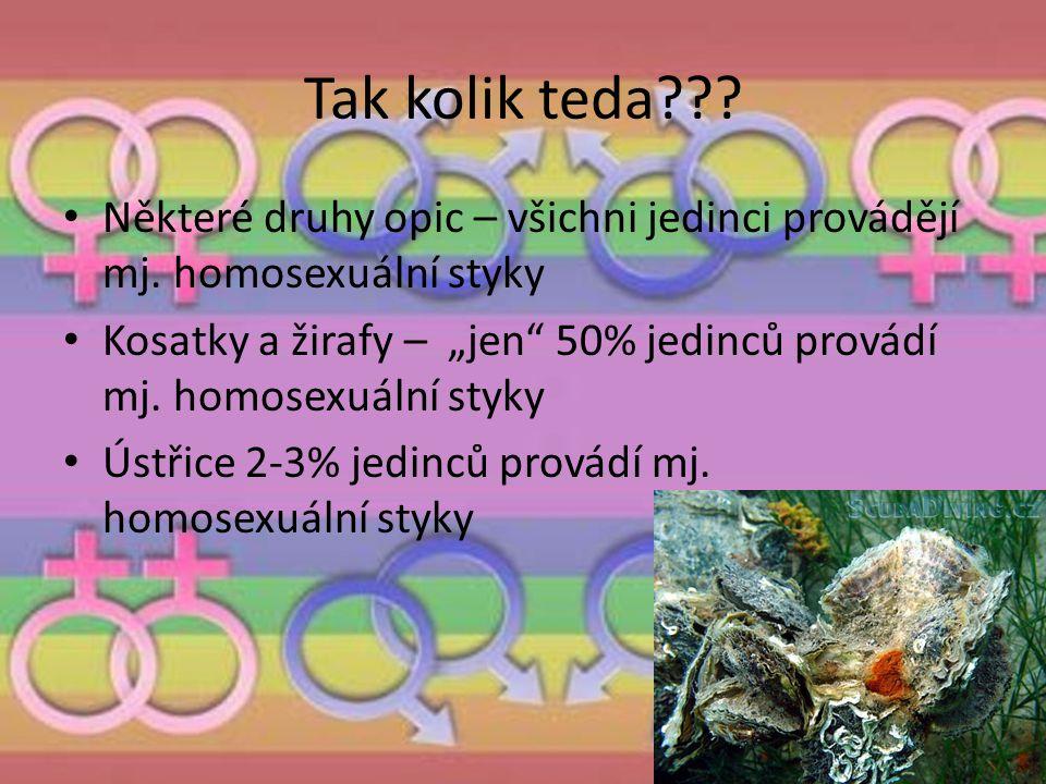 """Tak kolik teda??? Některé druhy opic – všichni jedinci provádějí mj. homosexuální styky Kosatky a žirafy – """"jen"""" 50% jedinců provádí mj. homosexuální"""