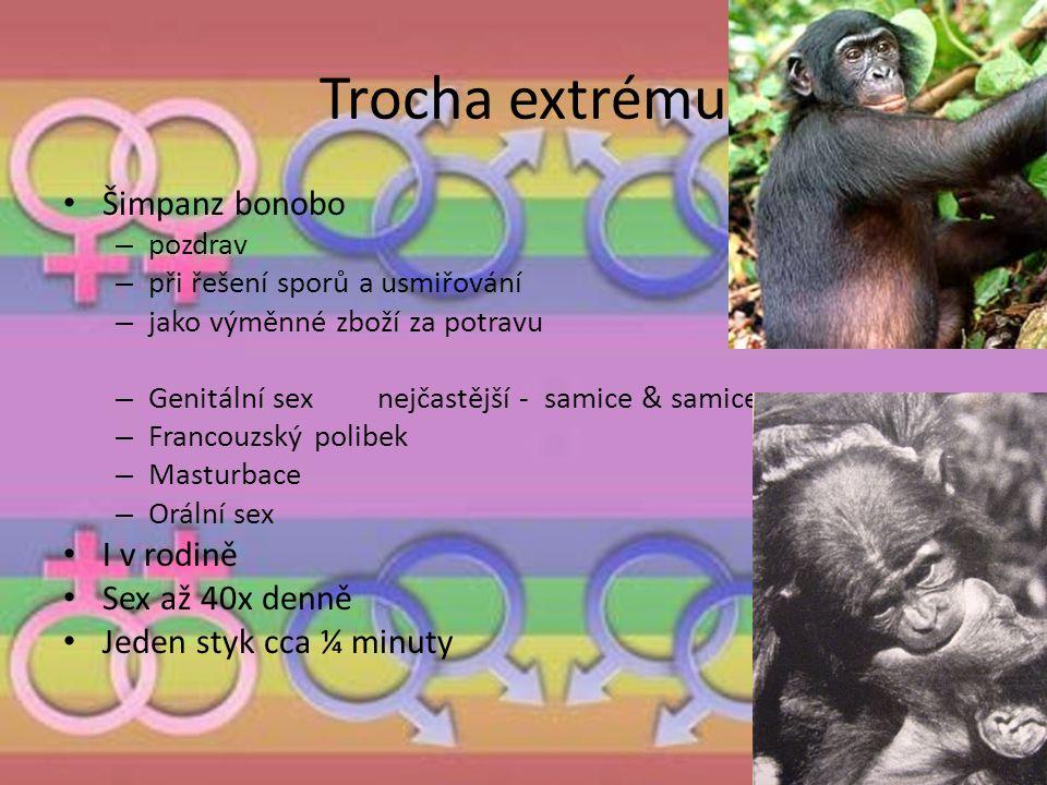 Trocha extrému Šimpanz bonobo – pozdrav – při řešení sporů a usmiřování – jako výměnné zboží za potravu – Genitální sex nejčastější - samice & samice