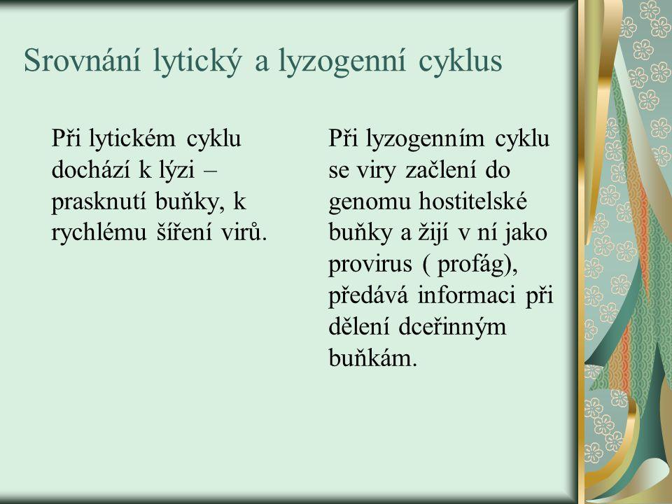 Srovnání lytický a lyzogenní cyklus Při lytickém cyklu dochází k lýzi – prasknutí buňky, k rychlému šíření virů. Při lyzogenním cyklu se viry začlení