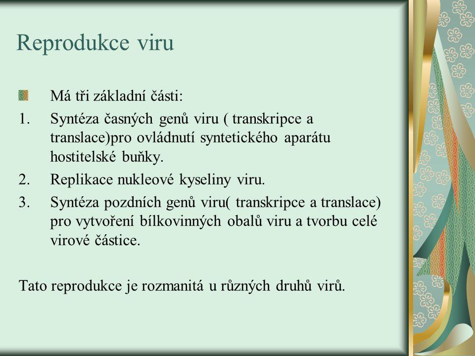 Reprodukce viru Má tři základní části: 1.Syntéza časných genů viru ( transkripce a translace)pro ovládnutí syntetického aparátu hostitelské buňky. 2.R