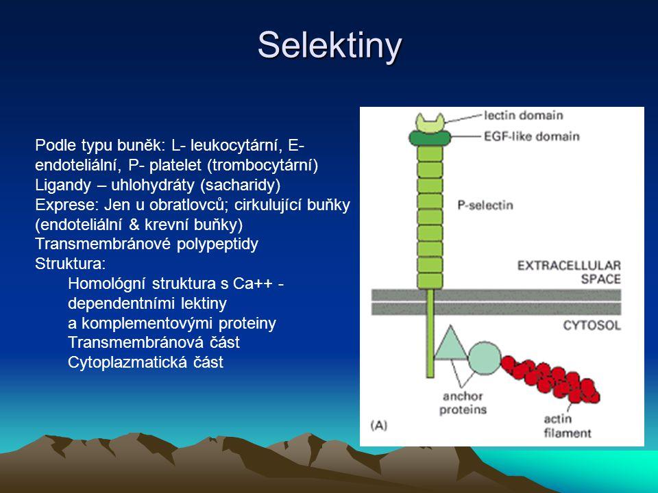 Selektiny Podle typu buněk: L- leukocytární, E- endoteliální, P- platelet (trombocytární) Ligandy – uhlohydráty (sacharidy) Exprese: Jen u obratlovců;