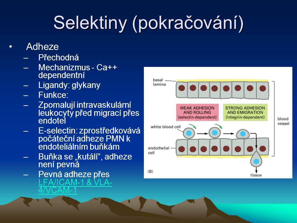 Selektiny (pokračování) Adheze –Přechodná –Mechanizmus - Ca++ dependentní –Ligandy: glykany –Funkce: –Zpomalují intravaskulární leukocyty před migrací
