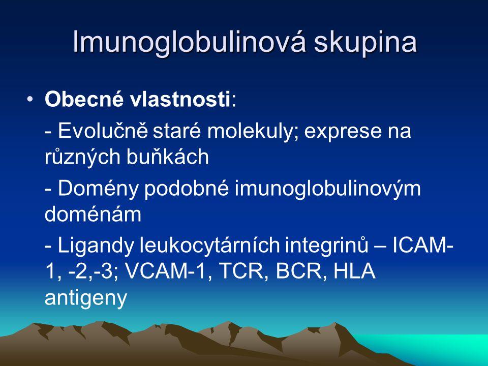 Imunoglobulinová skupina Obecné vlastnosti: - Evolučně staré molekuly; exprese na různých buňkách - Domény podobné imunoglobulinovým doménám - Ligandy