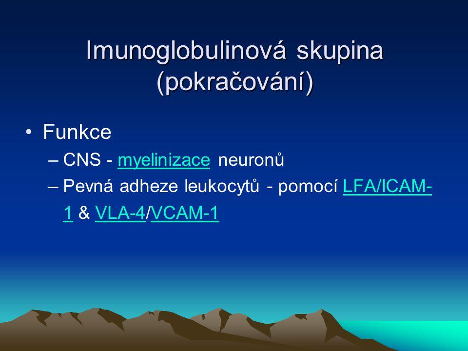 Imunoglobulinová skupina (pokračování) Funkce –CNS - myelinizace neuronůyelini –Pevná adheze leukocytů - pomocí LFA/ICAM- 1 & VLA-4/VCAM-1LFA/ICAM- 1V