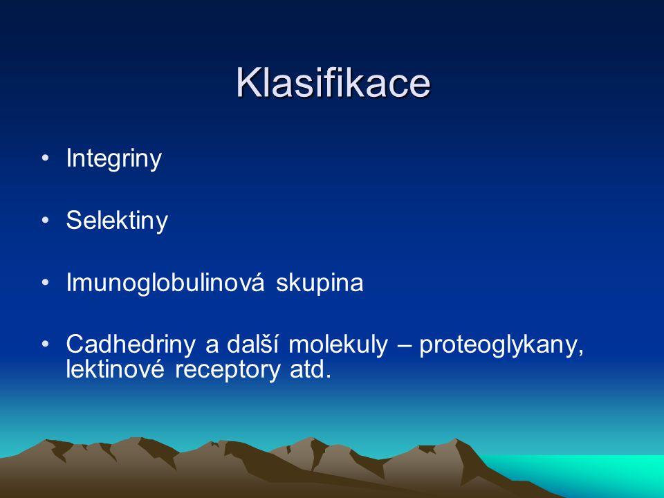 Klasifikace Integriny Selektiny Imunoglobulinová skupina Cadhedriny a další molekuly – proteoglykany, lektinové receptory atd.