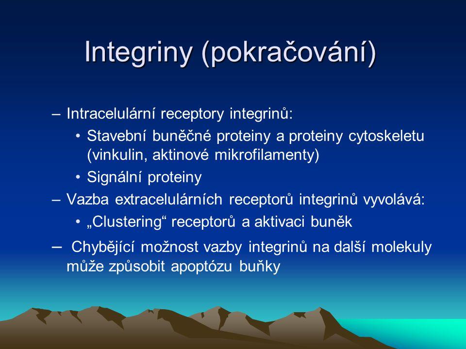 Integriny (pokračování) –Intracelulární receptory integrinů: Stavební buněčné proteiny a proteiny cytoskeletu (vinkulin, aktinové mikrofilamenty) Sign