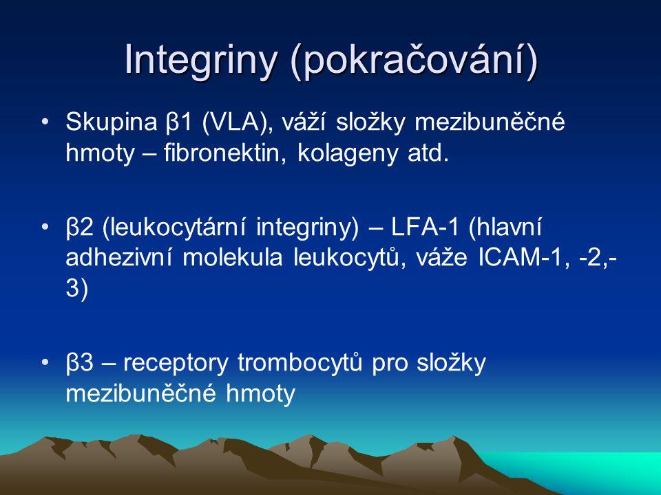 Integriny (pokračování) Skupina β1 (VLA), váží složky mezibuněčné hmoty – fibronektin, kolageny atd. β2 (leukocytární integriny) – LFA-1 (hlavní adhez