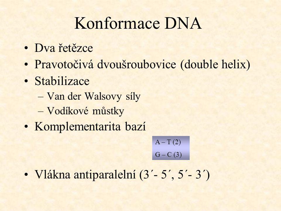 Konformace DNA Dva řetězce Pravotočivá dvoušroubovice (double helix) Stabilizace –Van der Walsovy síly –Vodíkové můstky Komplementarita bazí A – T (2)