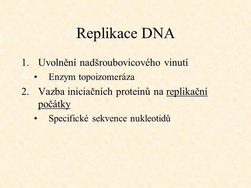Replikace DNA 1.Uvolnění nadšroubovicového vinutí Enzym topoizomeráza 2.Vazba iniciačních proteinů na replikační počátky Specifické sekvence nukleotid