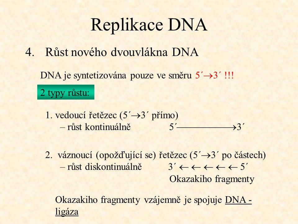Replikace DNA 4.Růst nového dvouvlákna DNA DNA je syntetizována pouze ve směru 5´  3´ !!! 2 typy růstu: 1. vedoucí řetězec (5´  3´ přímo) – růst kon