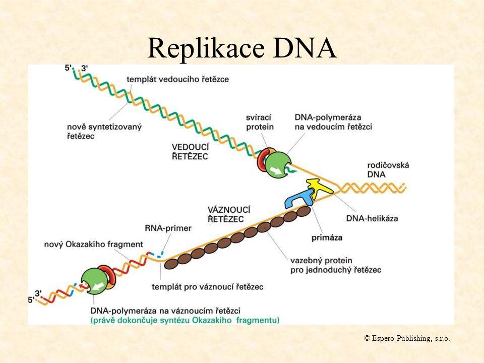 Replikace DNA © Espero Publishing, s.r.o.