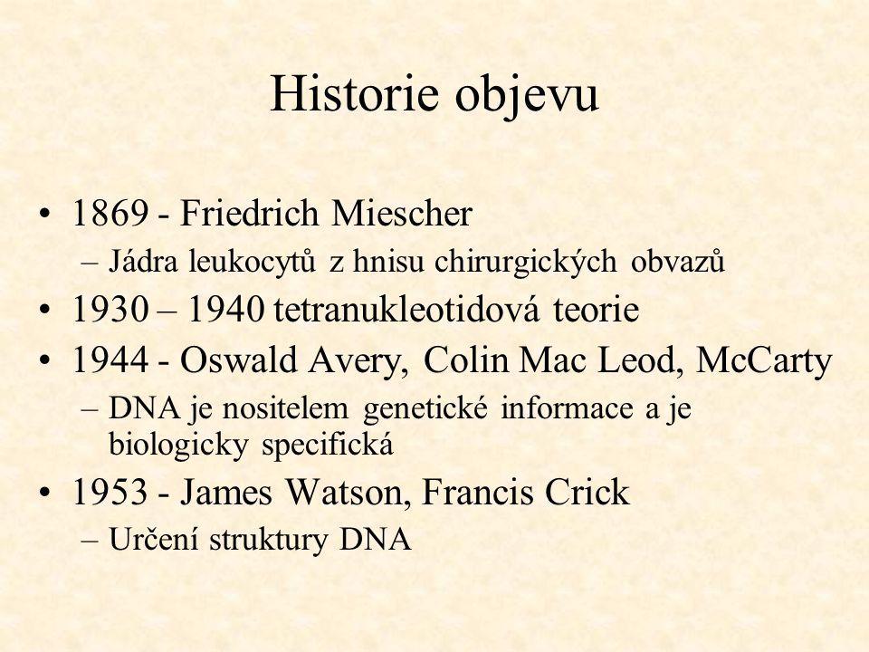 Historie objevu 1869 - Friedrich Miescher –Jádra leukocytů z hnisu chirurgických obvazů 1930 – 1940 tetranukleotidová teorie 1944 - Oswald Avery, Coli
