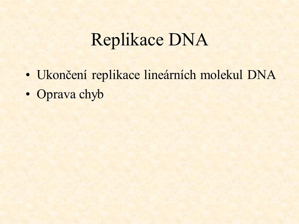 Replikace DNA Ukončení replikace lineárních molekul DNA Oprava chyb