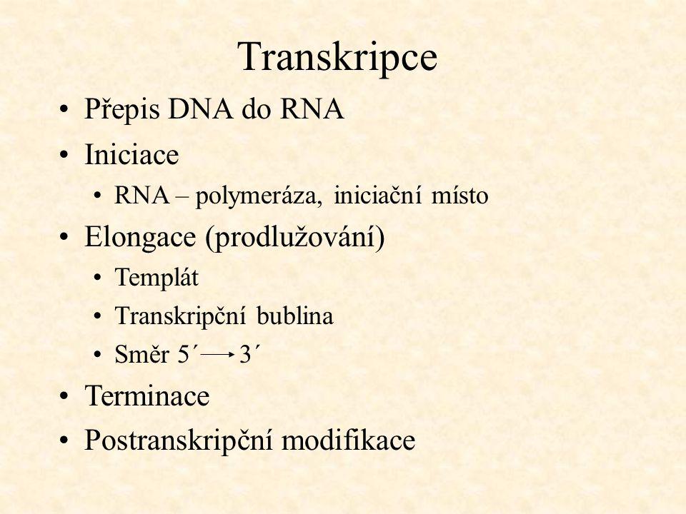 Transkripce Přepis DNA do RNA Iniciace RNA – polymeráza, iniciační místo Elongace (prodlužování) Templát Transkripční bublina Směr 5´ 3´ Terminace Pos