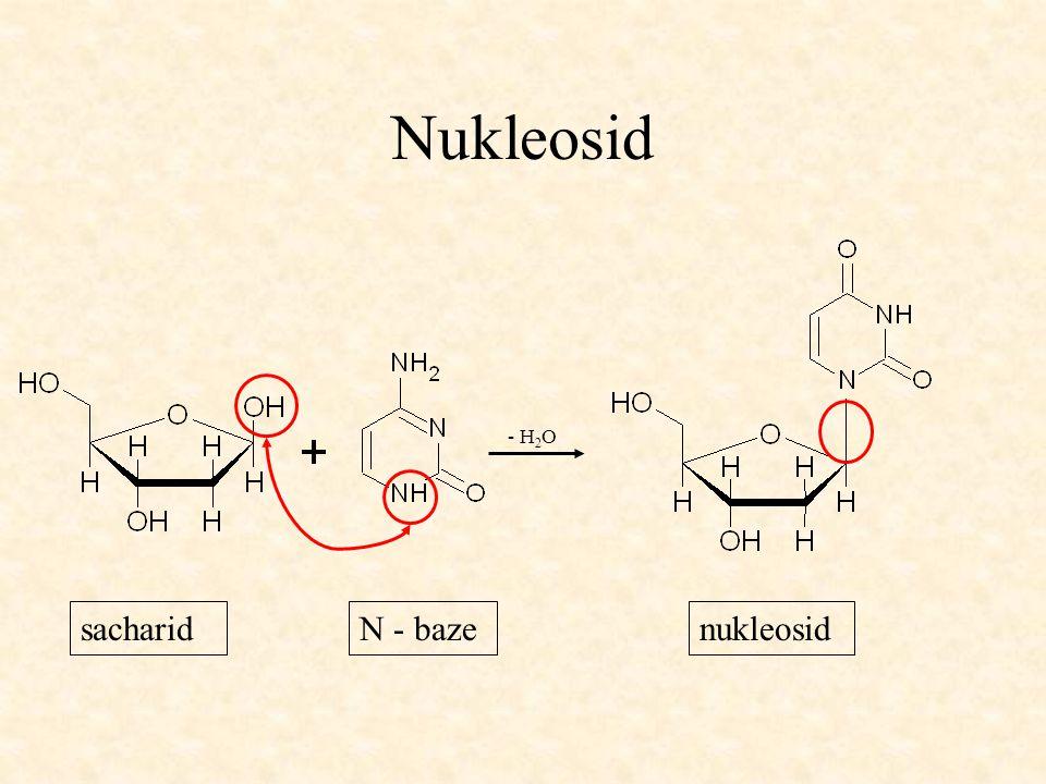 Nukleosid - H 2 O sacharidN - bazenukleosid