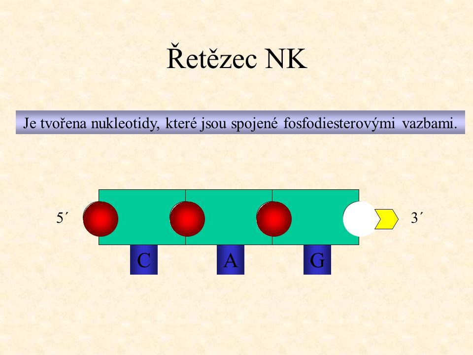 Řetězec NK Je tvořena nukleotidy, které jsou spojené fosfodiesterovými vazbami. CAG 5´3´