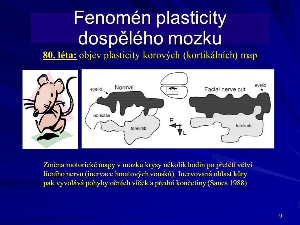 9 Fenomén plasticity dospělého mozku Změna motorické mapy v mozku krysy několik hodin po přetětí větví lícního nervu (inervace hmatových vousků).