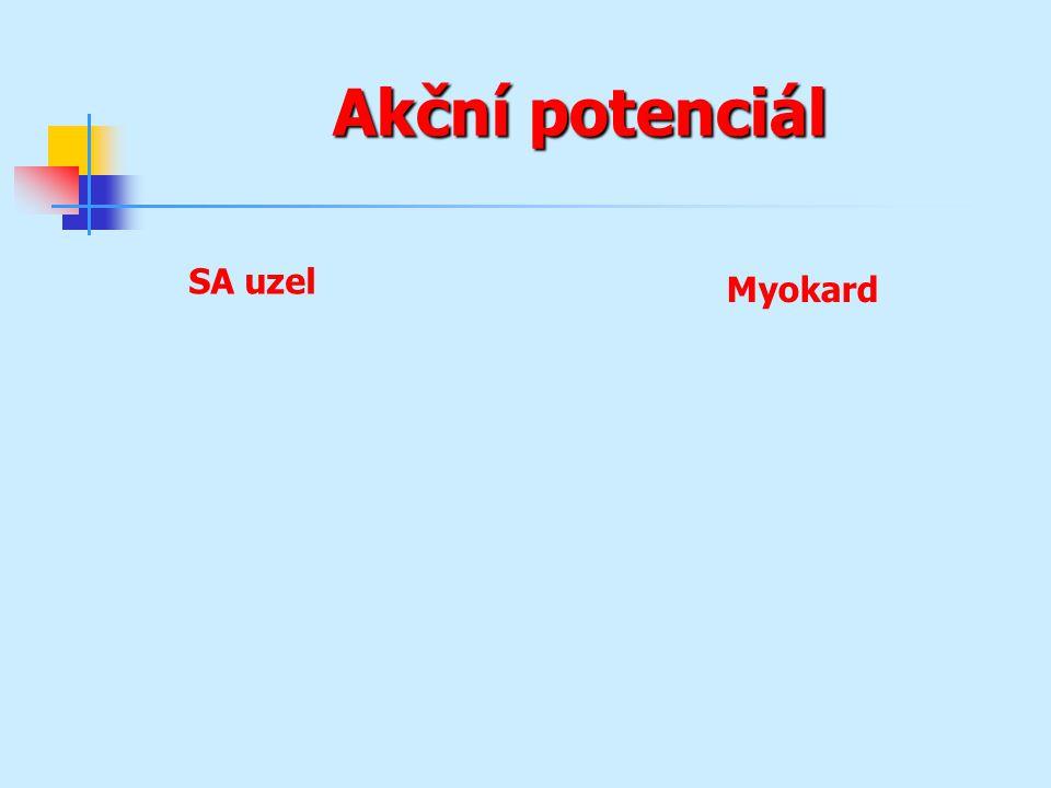 Akční potenciál SA uzel Myokard