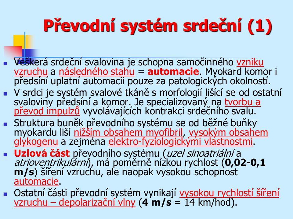 Převodní systém srdeční (1) Veškerá srdeční svalovina je schopna samočinného vzniku vzruchu a následného stahu = automacie. Myokard komor i předsíní u