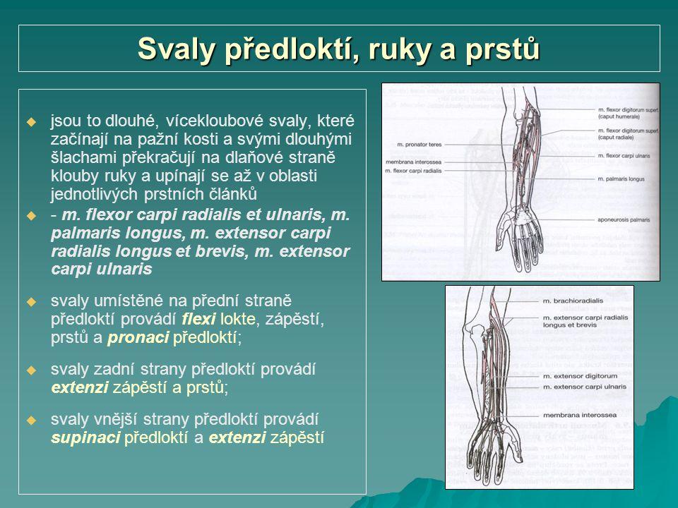Svaly předloktí, ruky a prstů   jsou to dlouhé, vícekloubové svaly, které začínají na pažní kosti a svými dlouhými šlachami překračují na dlaňové st