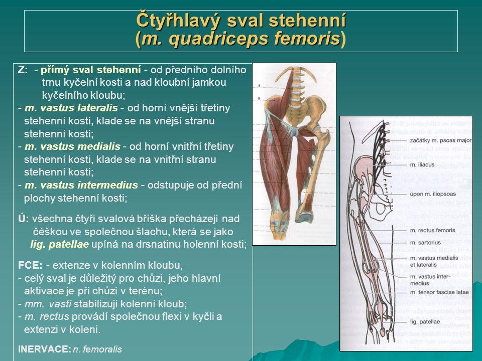 Čtyřhlavý sval stehenní (m. quadriceps femoris Čtyřhlavý sval stehenní (m. quadriceps femoris) Z: - přímý sval stehenní - od předního dolního trnu kyč