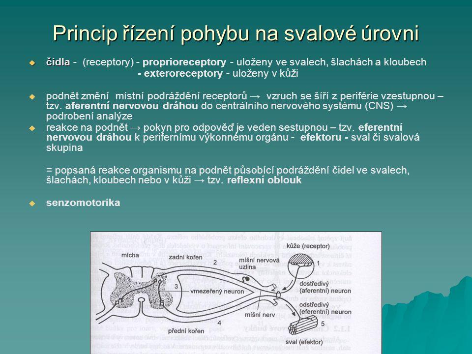 Princip řízení pohybu na svalové úrovni  čidla  čidla - (receptory) - proprioreceptory - uloženy ve svalech, šlachách a kloubech - exteroreceptory -