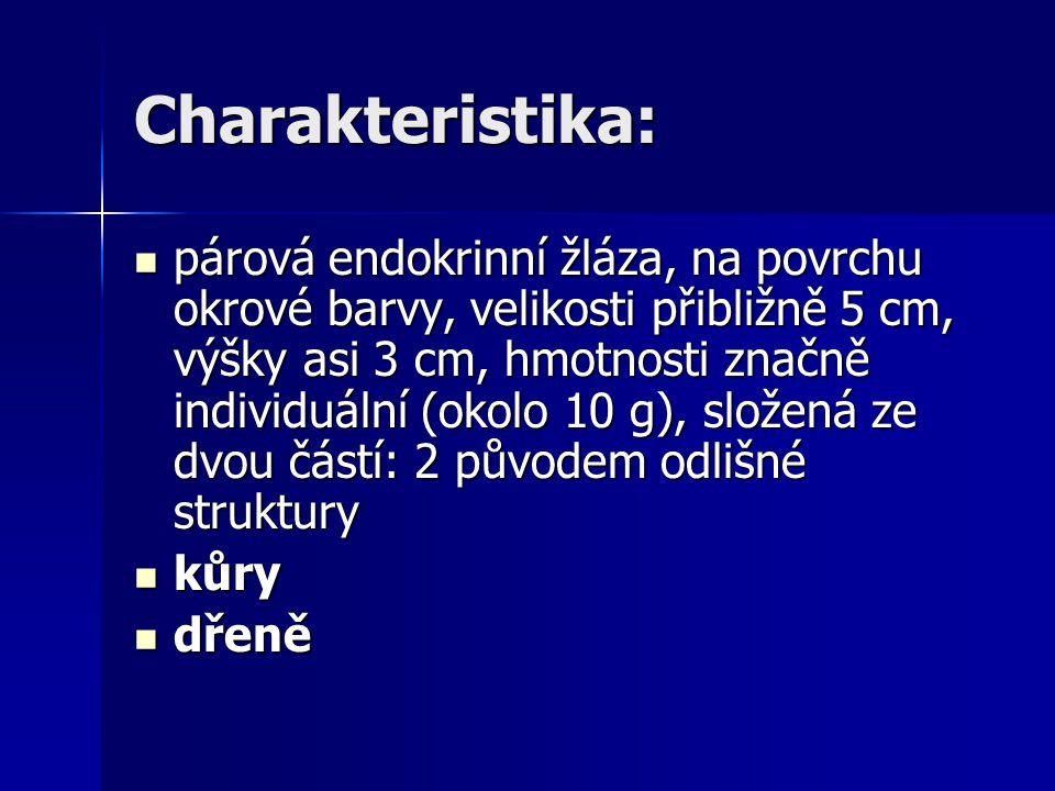 Charakteristika: párová endokrinní žláza, na povrchu okrové barvy, velikosti přibližně 5 cm, výšky asi 3 cm, hmotnosti značně individuální (okolo 10 g