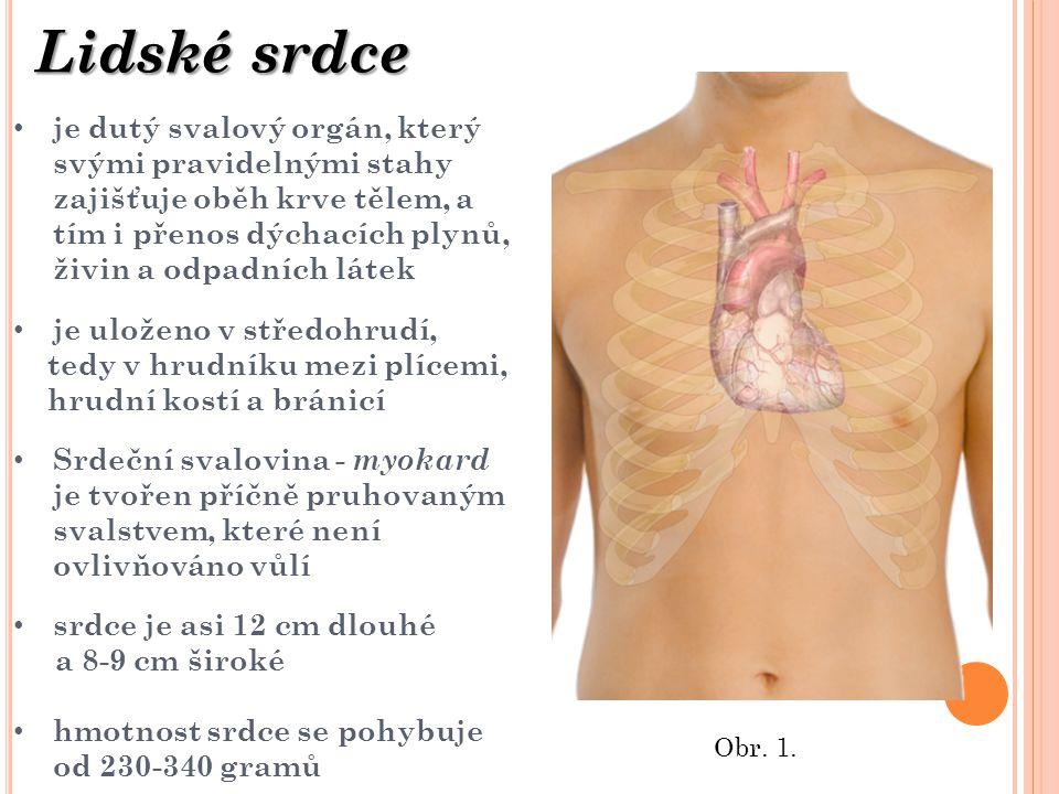 srdce je rozděleno na 4 samostatné dutiny (2 síně a 2 komory) rozdělené přepážkami krev při průchodu srdcem protéká dutinami, které jsou navzájem odděleny chlopněmi, zabraňujícími zpětnému toku krve neokysličená krev je do srdce přiváděna dutými žilami, ty jsou dvě: horní, která přivádí krev z horní části těla, a dolní, duté žíly se před srdcem slévají v žilném splavu okysličená krev je z těla odváděna tepnami (aortami) Popis srdce