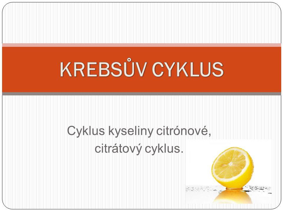 Cyklus kyseliny citrónové, citrátový cyklus.
