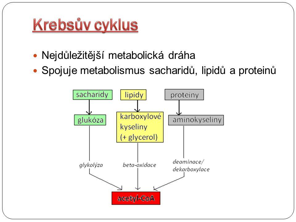 Nejdůležitější metabolická dráha Spojuje metabolismus sacharidů, lipidů a proteinů