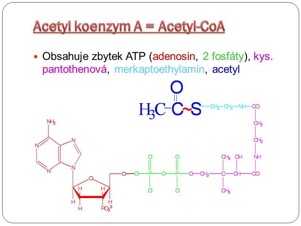 Uvolněná energie umožňuje v mitochondriích fosforylaci ADP na ATP Dýchací řetězec končí soubor reakcí, kterými se z živin uvolňuje energie Energetické rezervy ATP se spotřebovávají na práci chemickou (syntéza), osmotickou (transport) a mechanickou (stah svalu)
