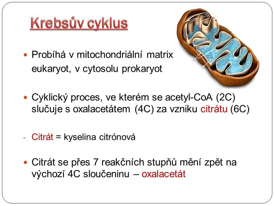 Probíhá v mitochondriální matrix eukaryot, v cytosolu prokaryot Cyklický proces, ve kterém se acetyl-CoA (2C) slučuje s oxalacetátem (4C) za vzniku ci