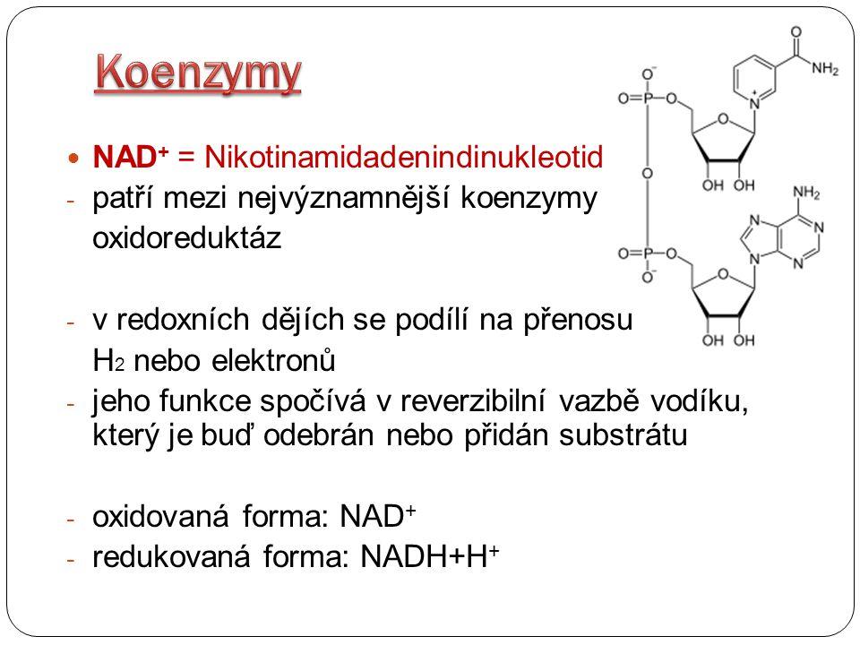 NAD + = Nikotinamidadenindinukleotid - patří mezi nejvýznamnější koenzymy oxidoreduktáz - v redoxních dějích se podílí na přenosu H 2 nebo elektronů -