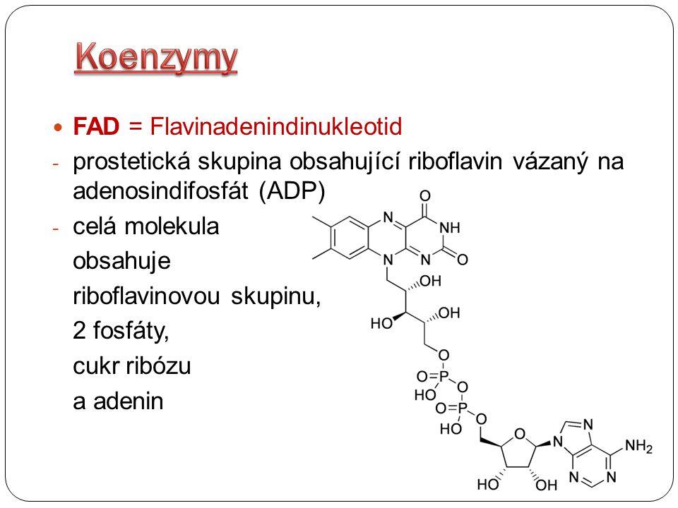 FAD = Flavinadenindinukleotid - oxidovaná forma: FAD - redukovaná forma: FADH 2 Redukovaná forma vzniká v Krebsově cyklu při dehydrogenaci sukcinátu na fumarát FADH 2 přenáší elektrony a H 2 atomy z Krebsova cyklu do elektronového transportního řetězce (tzv.
