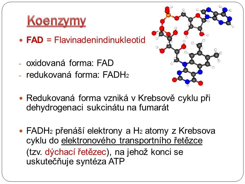 FAD = Flavinadenindinukleotid - oxidovaná forma: FAD - redukovaná forma: FADH 2 Redukovaná forma vzniká v Krebsově cyklu při dehydrogenaci sukcinátu n