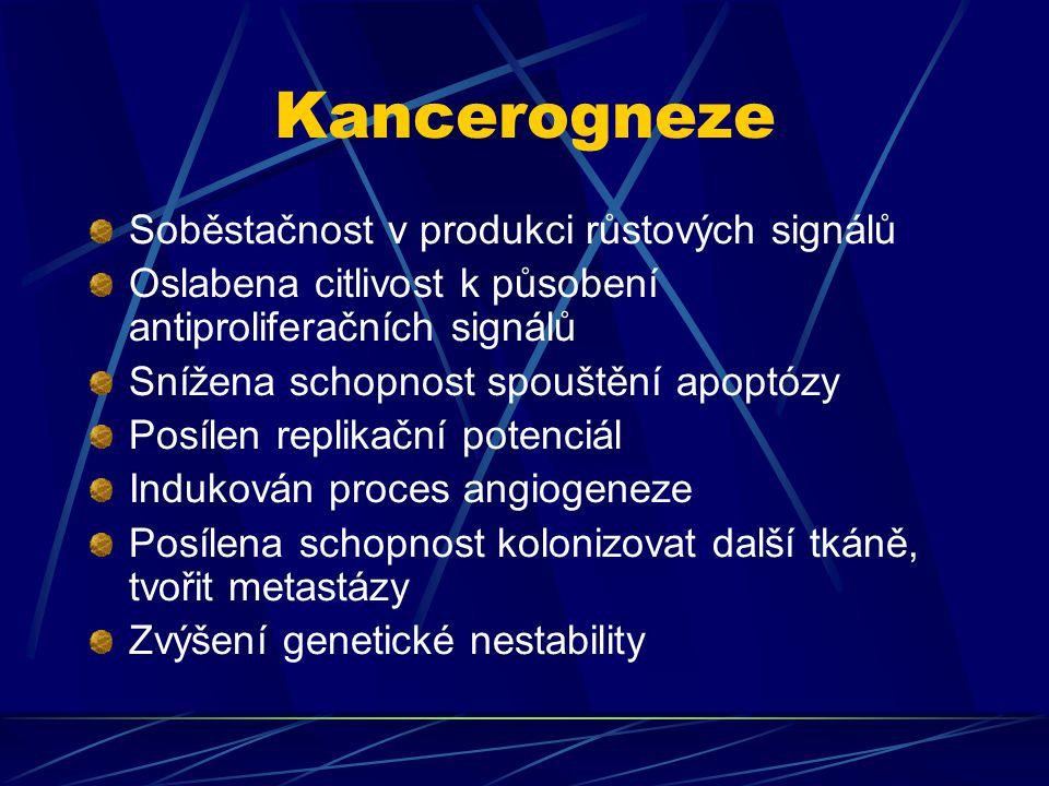 Kancerogneze Soběstačnost v produkci růstových signálů Oslabena citlivost k působení antiproliferačních signálů Snížena schopnost spouštění apoptózy P