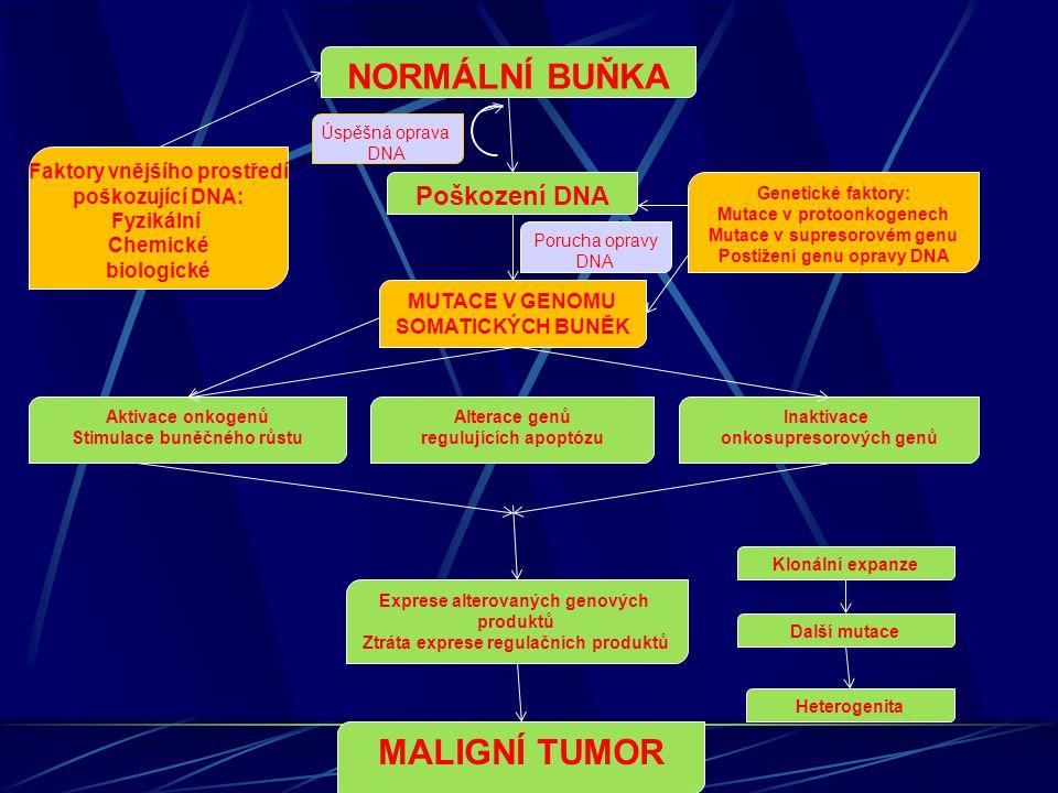 NORMÁLNÍ BUŇKA Faktory vnějšího prostředí poškozující DNA: Fyzikální Chemické biologické Poškození DNA Genetické faktory: Mutace v protoonkogenech Mut