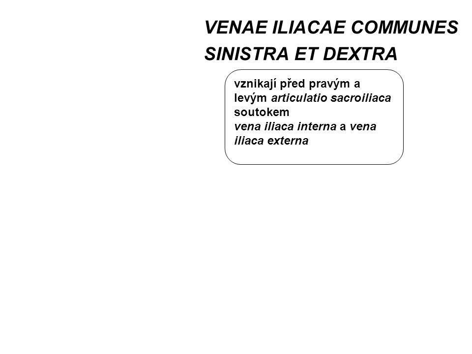 VENAE ILIACAE COMMUNES SINISTRA ET DEXTRA vznikají před pravým a levým articulatio sacroiliaca soutokem vena iliaca interna a vena iliaca externa