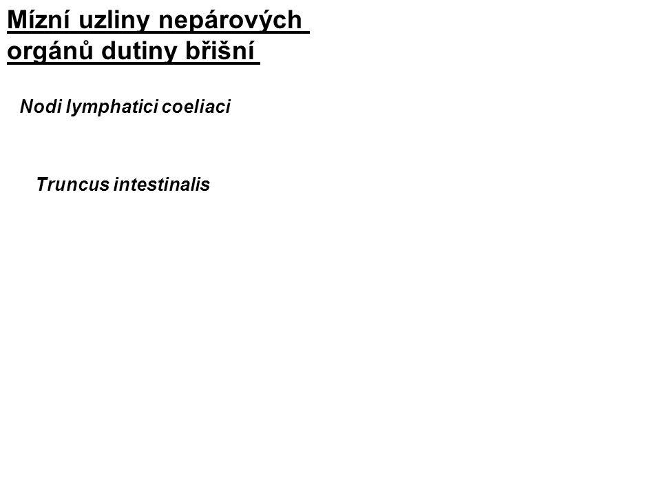 Nodi lymphatici coeliaci Truncus intestinalis Mízní uzliny nepárových orgánů dutiny břišní