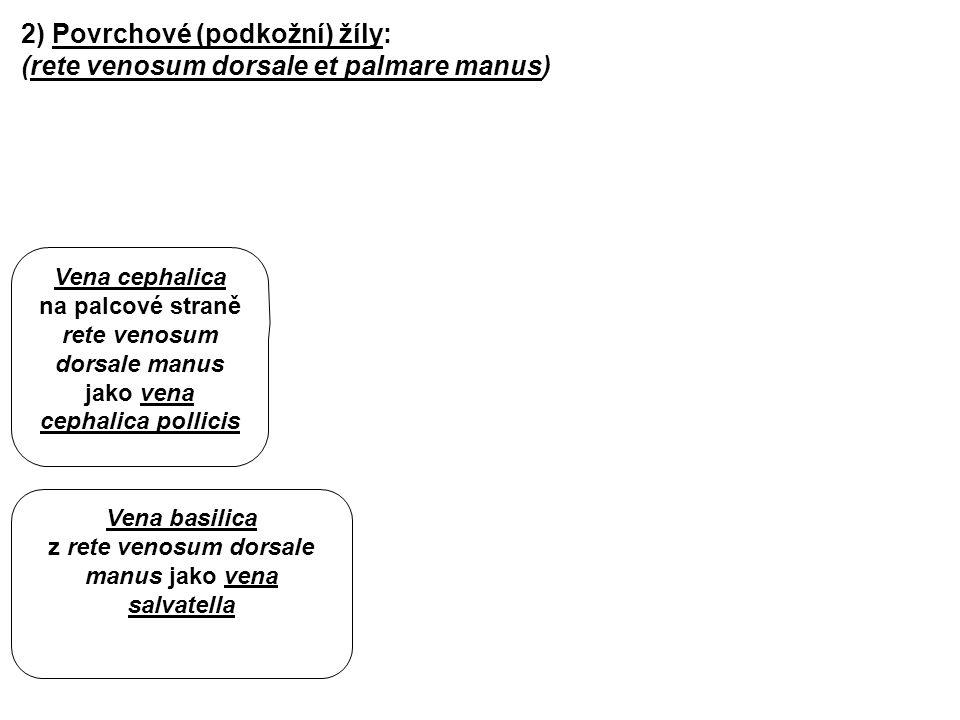 2) Povrchové (podkožní) žíly: (rete venosum dorsale et palmare manus) Vena basilica z rete venosum dorsale manus jako vena salvatella Vena cephalica n