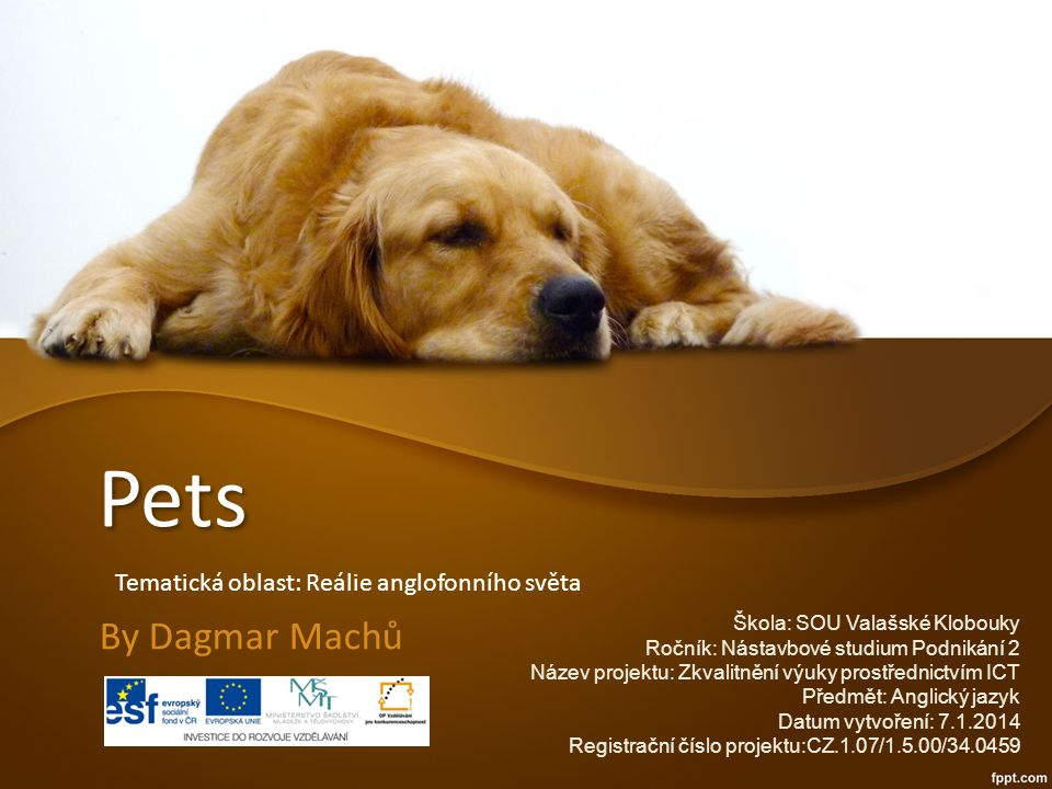 Do you have a pet.Why people have pets?Why people don´t have pets.