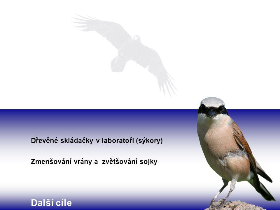 Dřevěné skládačky v laboratoři (sýkory) Zmenšování vrány a zvětšování sojky Další cíle