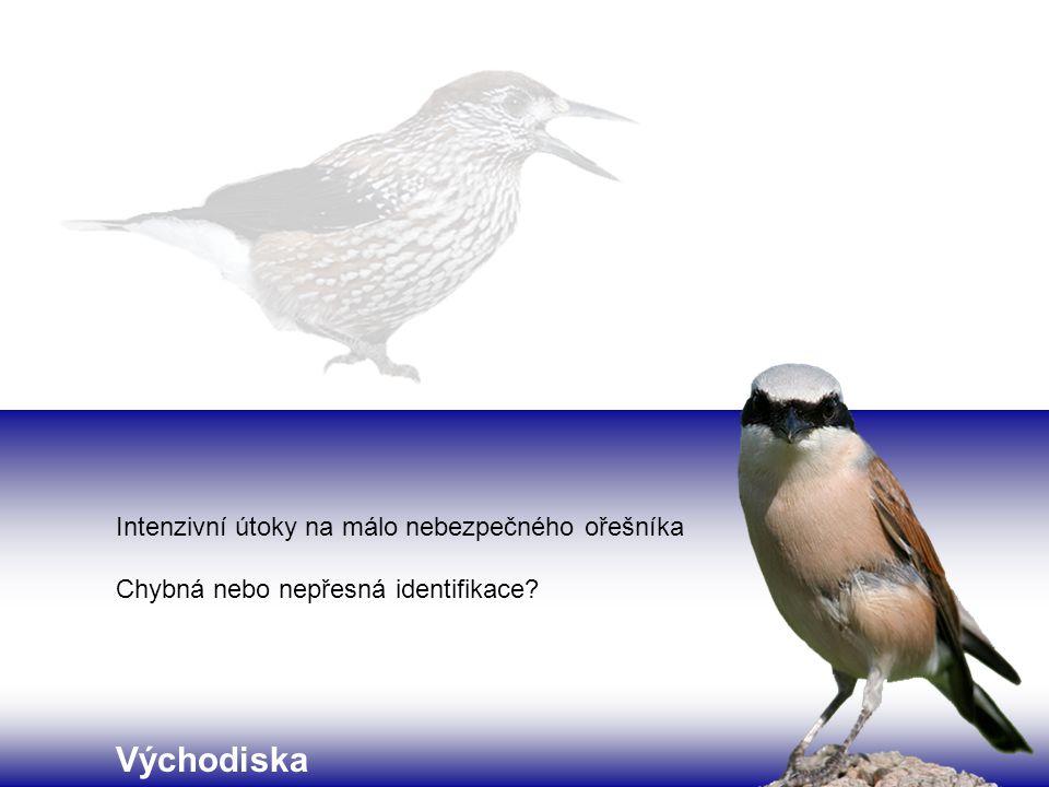 Shettleworth (1998) navrhla tři modely 1.identifikace klíčových znaků zahnutý zobák ➔ dravec 2.
