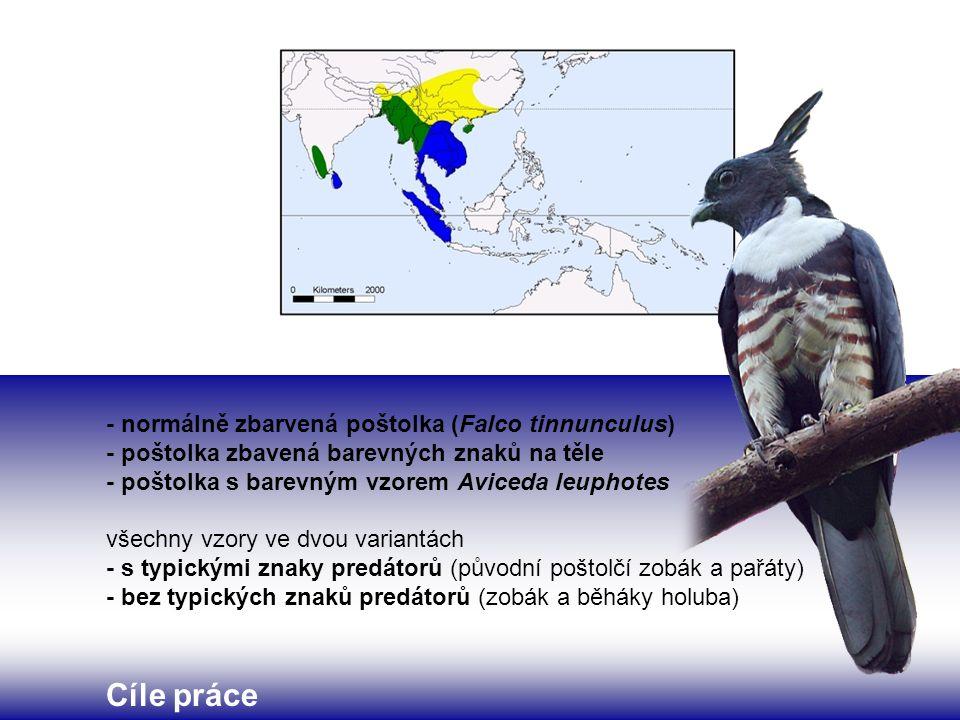 - normálně zbarvená poštolka (Falco tinnunculus) - poštolka zbavená barevných znaků na těle - poštolka s barevným vzorem Aviceda leuphotes všechny vzo