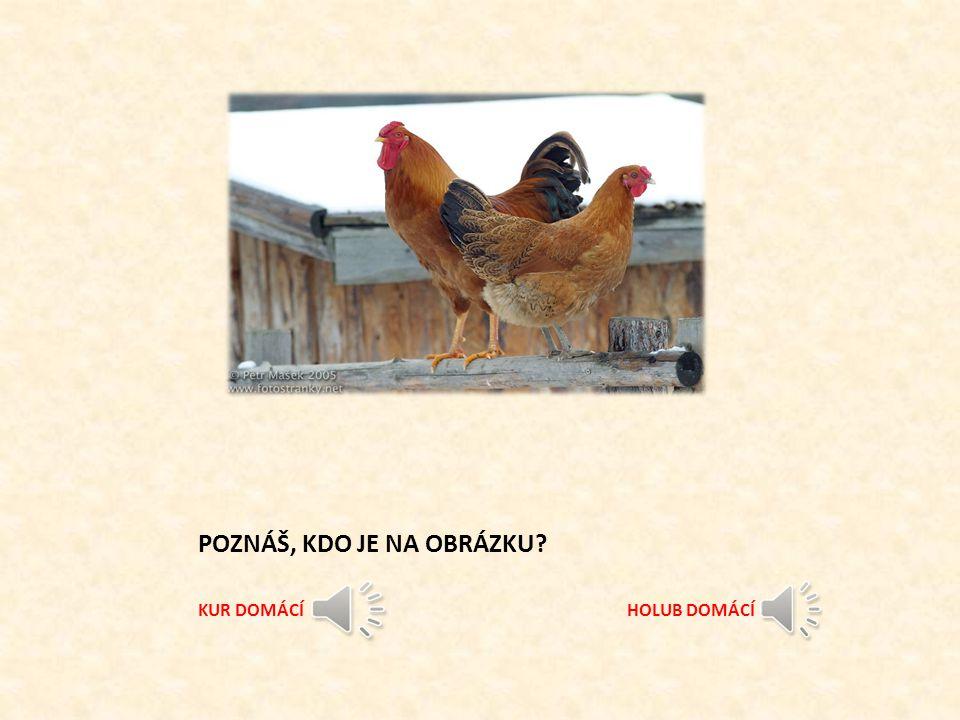 Milé děti. Jsem skřítek hospodáříček a jmenuji se Lojza. Moc rád bych si Vás trošku vyzkoušel, co umíte z povídání o domácím ptactvu. Smím? ANO - NE M